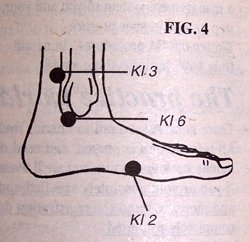Diagram of Foot - Copyright – Stock Photo / Register Mark