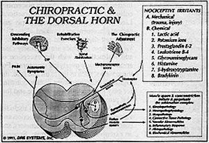 Chiropractic and the Doral Horn - Copyright – Stock Photo / Register Mark