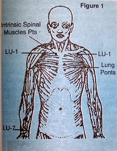 Diagram of Acupuncture Points - Copyright – Stock Photo / Register Mark