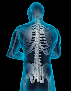 back spine - Copyright – Stock Photo / Register Mark