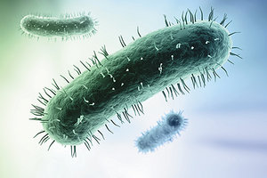 bacteria - Copyright – Stock Photo / Register Mark