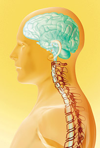 Brain and spine - Copyright – Stock Photo / Register Mark
