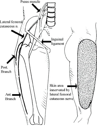 Lateral femoral cutaneous nerve anatomy