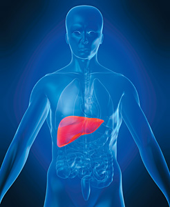 Fatty Liver Disease - Copyright – Stock Photo / Register Mark