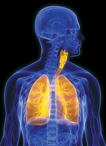 lungs - Copyright – Stock Photo / Register Mark