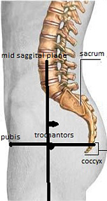 Landmarks for lateral sacrum / coccyx - Copyright – Stock Photo / Register Mark