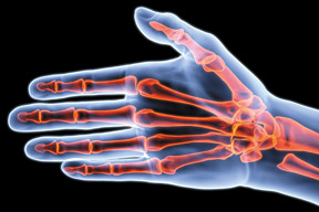 The bones of the hand - Copyright – Stock Photo / Register Mark