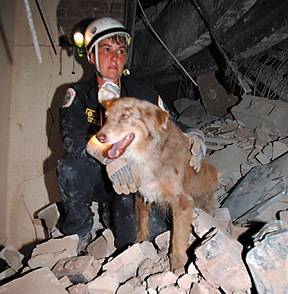 Search-and-rescue dogs - Copyright – Stock Photo / Register Mark